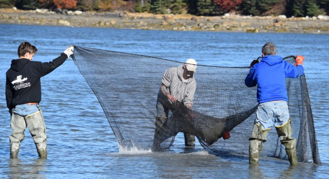 cleaning a net